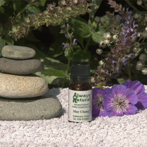 may chang oil essential oil